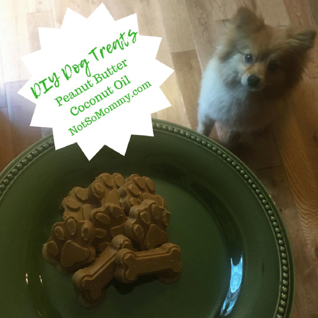 Switched Dog Food  Weeks Ago Now Dog Wont Eat