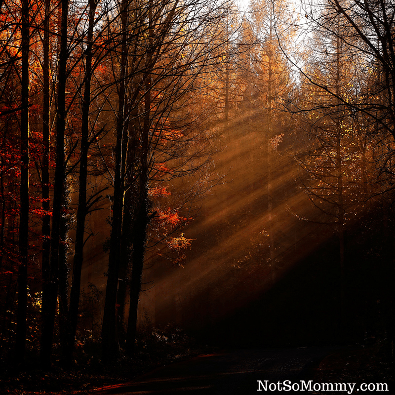 Photo of sunlight shining through a forest vibrant with fall colored leaves on Good Things: The Season of Fall Good Things Blog on Not So Mommy...
