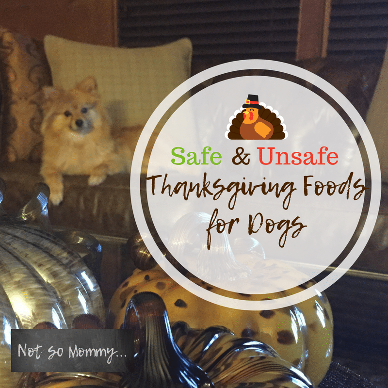 Photo of Maddie sitting on leather sofa with pumpkins in the foreground on Safe & Unsafe Thanksgiving Foods for Dogs on Dog Mom Blog on Not So Mommy...