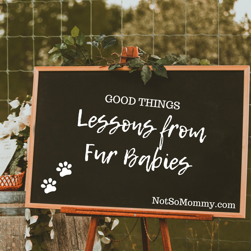 "Photo of a chalkboard with ""Good Things: Lessons from Fur Babies"" written on it on Not So Mommy... Blog"