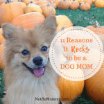 Photo of Maddie in a Pumpkin Patch on Not So Mommy 11 Reasons It Rocks to be a Dog Mom on Not So Mommy...