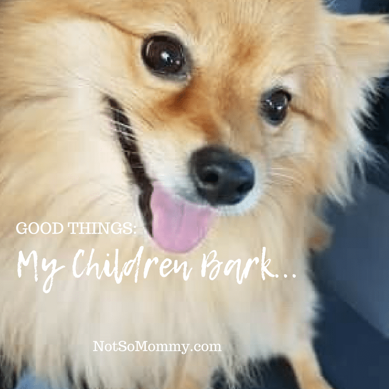 "Photo of our smiling Pomeranian, Maddie on ""My Children Bark"" on Good Things Blog on Not So Mommy..., a childless blog"