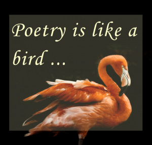 Photo of a flamingo on Poetry is like a bird, a blog by Nicci Fletcher