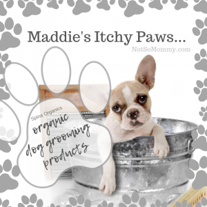 Photo of a puppy in a washbucket on Maddie's Itchy Paws - Organic Dog Grooming Products, a review of Spina Organics on Not So Mommy..., a childless blog