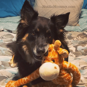 Photo of Luna with her giraffe on Not So Mommy..., a childless blog