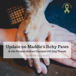 Photo of Maddie's paw along with Dane, Brandi, & Bruna's hands on Update on Maddie's Itchy Paw on Not So Mommy..., a childless blog