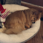 Photo of Maddie in her dog bed on Not So Mommy..., a childless blog
