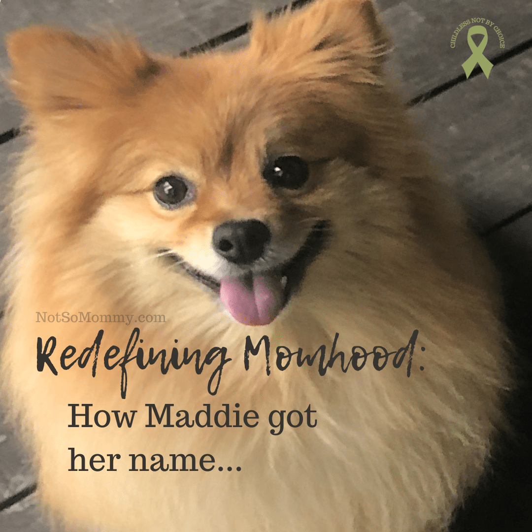 Photo of Maddie on Redefining Momhood: How Maddie got her name... on Not So Mommy..., an infertility, childless not by choice, and dog mom blog
