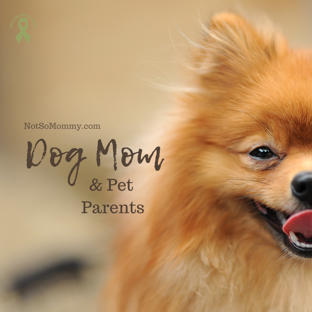 Photo of a smiling Pomeranian on Dog Mom & Pet Parent Resources on Not So Mommy..., an infertility & childless blog