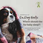 "Photo of a puppy covered by a blanket on ""On Dog Beds: Where should the fur baby sleep?!"" on Not So Mommy..., a childless blog"
