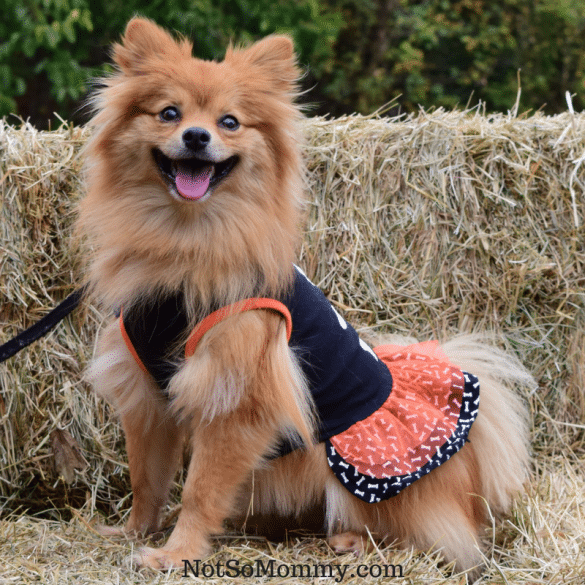 Photo of Maddie in her Halloween dress on Fashionista Article on Not So Mommy... Blog