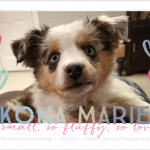 Photo of Anne's Puppy Announcement on Anne's Story on Not So Mommy..., an infertility and childless blog
