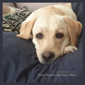 """Photo of Lucy on """"Our Pet Parent Life Stories: Chewie & Lucy's Mom"""" on Not So Mommy..., a childless dog mom blog"""