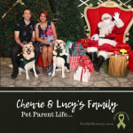 Christmas 2020 Photo of Chewie & Lucy's Family on Not So Mommy..., a childless dog mom blog