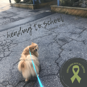 Photo of Maddie looking over her shoulder as we headed into school on Not So Mommy..., a childless dog mom blog